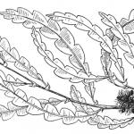 Sweetfern Chamomile Gruit Ale