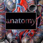 """Anatomy"" made into a short film by Marie Craven"