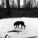 [Tweet] thirsty dog  the pond's ice...