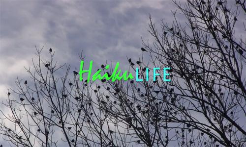 HaikuLife banner